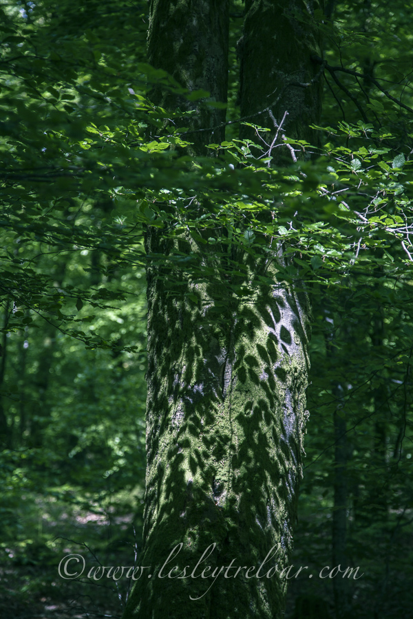 c5d2_2013_france_norm_lesaulneaux_forest-17-1