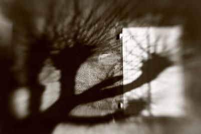 arbre d'hivier avec l'ombre