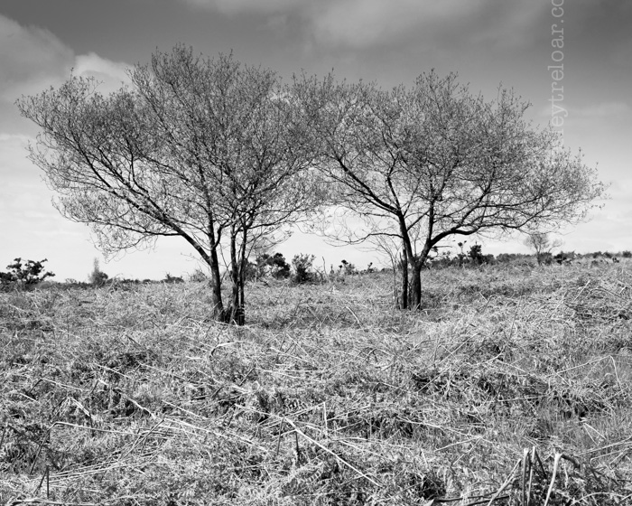 c5d2_2014_brit_coat_liscuit-163-Edit-Edit