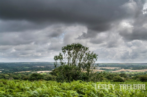 px_2014_cwall_godolphin_hill_alix-501