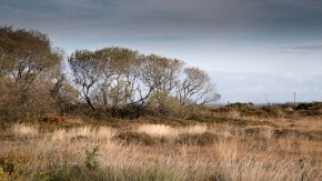 c6d_2014_cwall_goonhilly-1-Edit