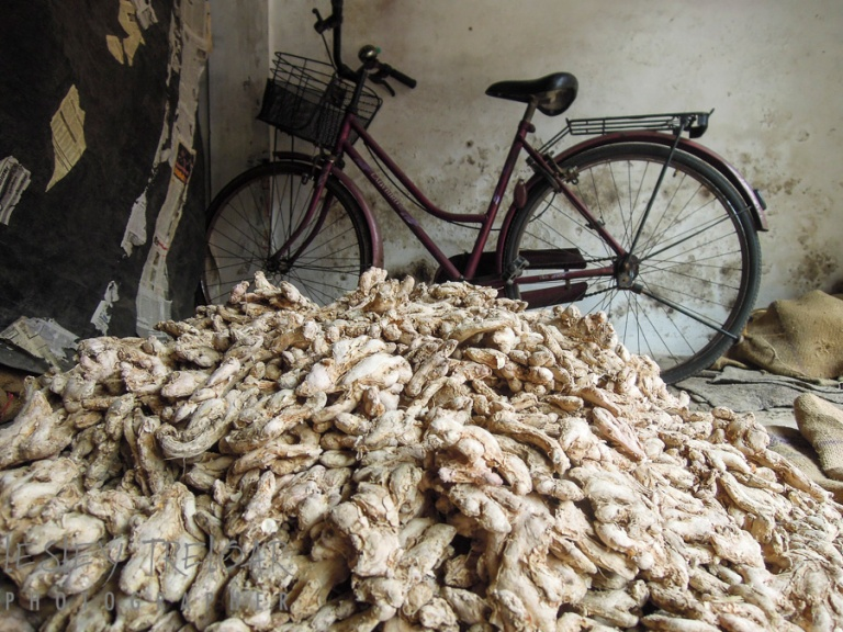 nk_2014_india_kerala_fortkochi_biking-73
