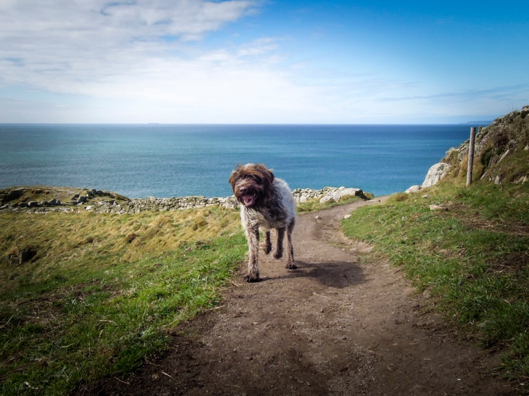 20150426_cwall_rinsey_monty-1
