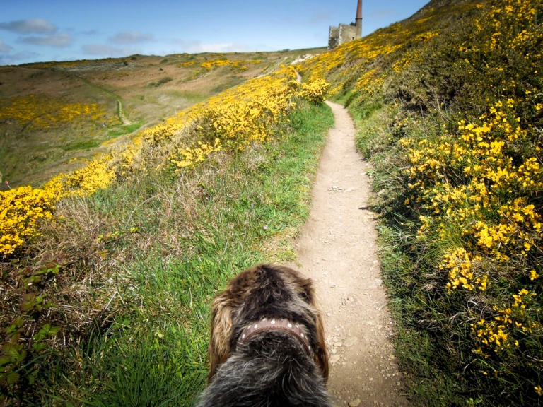20150426_cwall_rinsey_monty-10