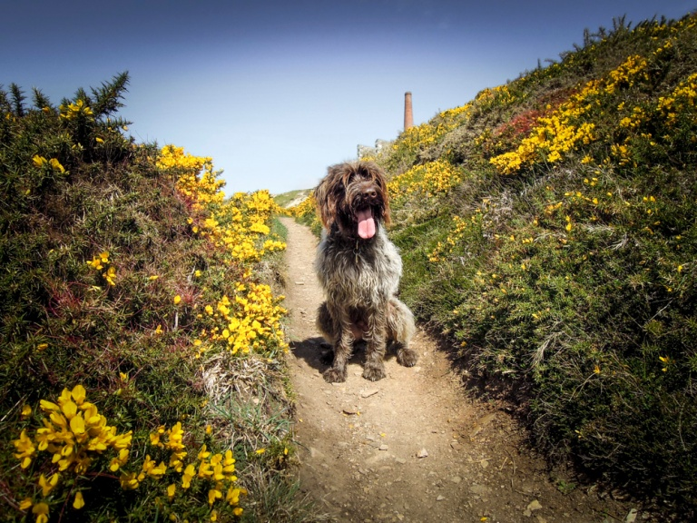 20150426_cwall_rinsey_monty-16