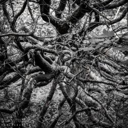 Crazy wild tree