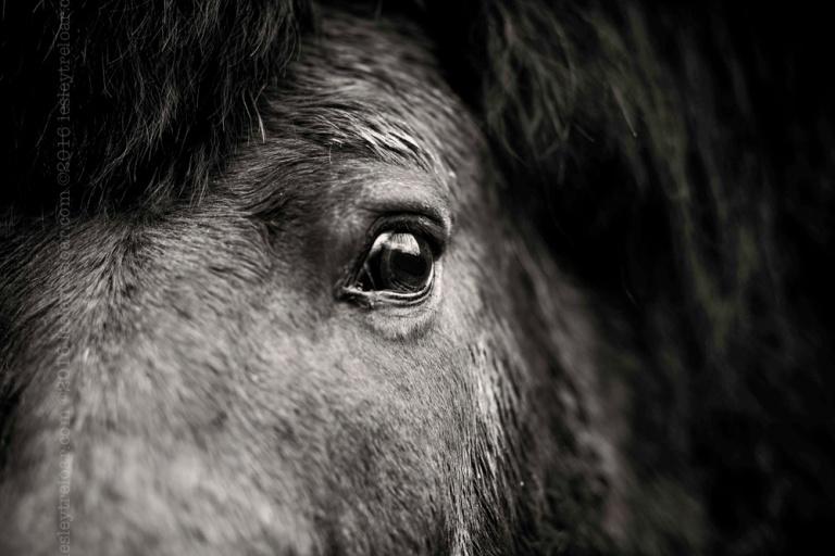 20160301_france_haute-pyrenees_horses-36-Edit