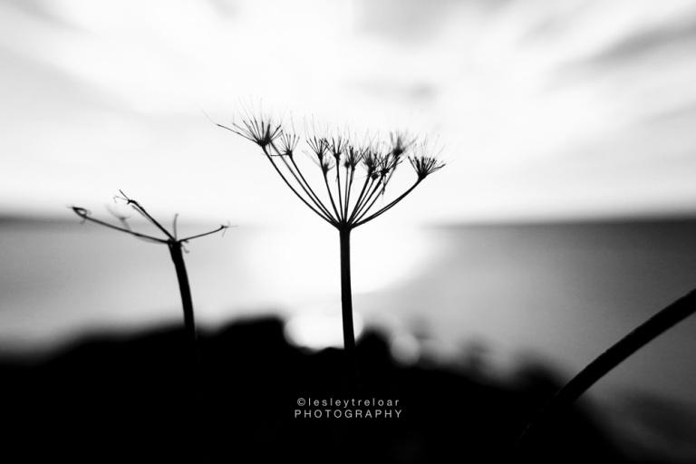 20161107_cwall_perrann_lou_plants-31